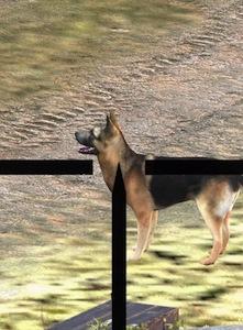¿Por qué liquidar a Hitler si puedes matar a su perro?