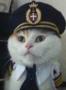 Captain Cat, el juego del verano ya está aquí